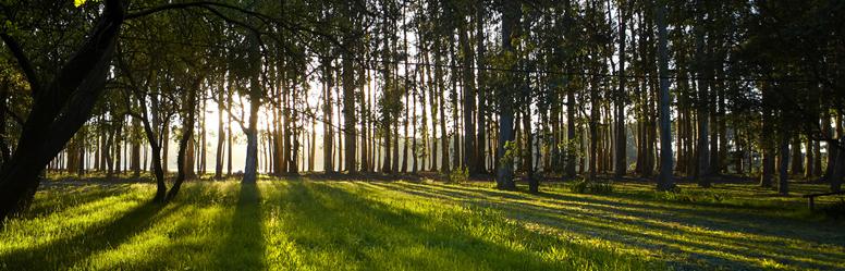 ENCE_forestal