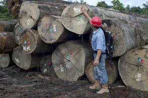 Esta iniciativa, apoyada por la FAO, combate la tala ilegal y promueve medios de vida sostenibles.
