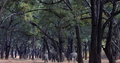 foresta-di-ebano