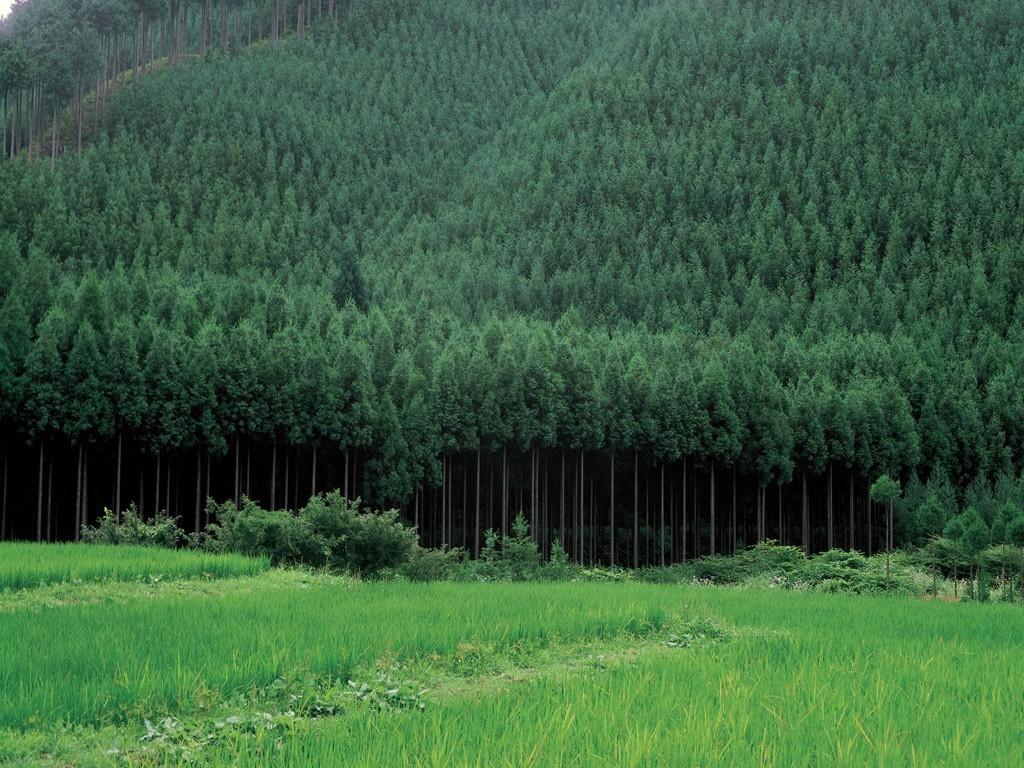 bosque-madera-justa