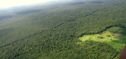 GUATEMALA-selva
