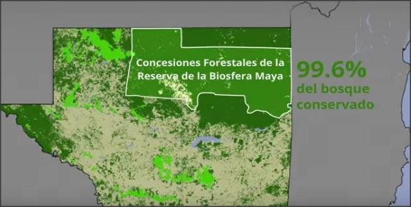 MADERAJUSTA_BiosferaMaya